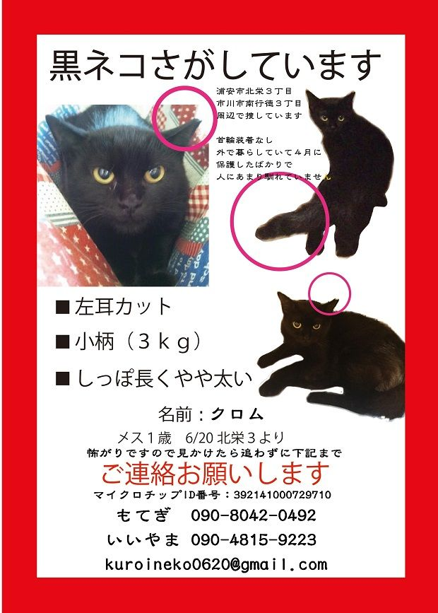 迷い猫クロム620×867