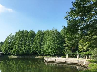 真夏の栃木県中央公園