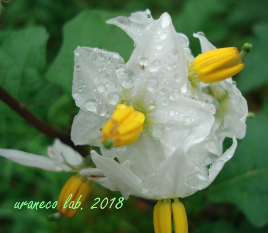 6月18日a rainy day