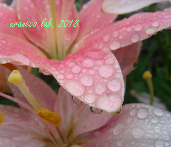 6月18日a rainy day8