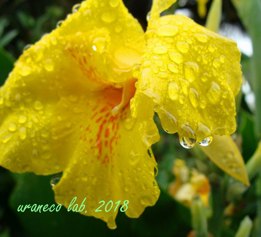 6月18日a rainy day10