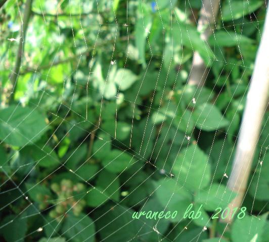 6月18日spider web