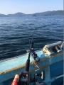 十三浜ヒラメ釣り