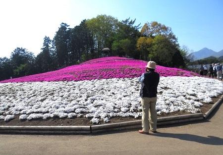 IMG_1523三郷の芝桜