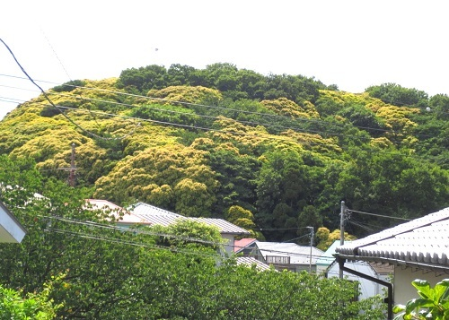 IMG_1826横須賀の森