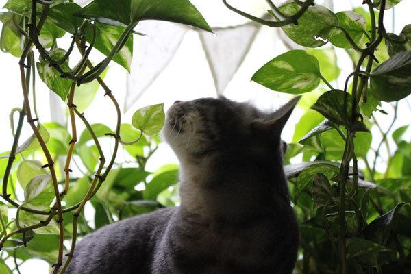 ジャングルごっこ