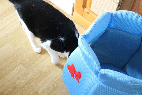 悩んで金魚鉢にした