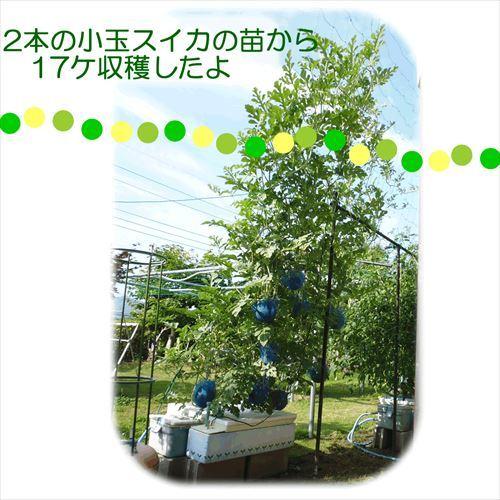 303-05_Re.jpg