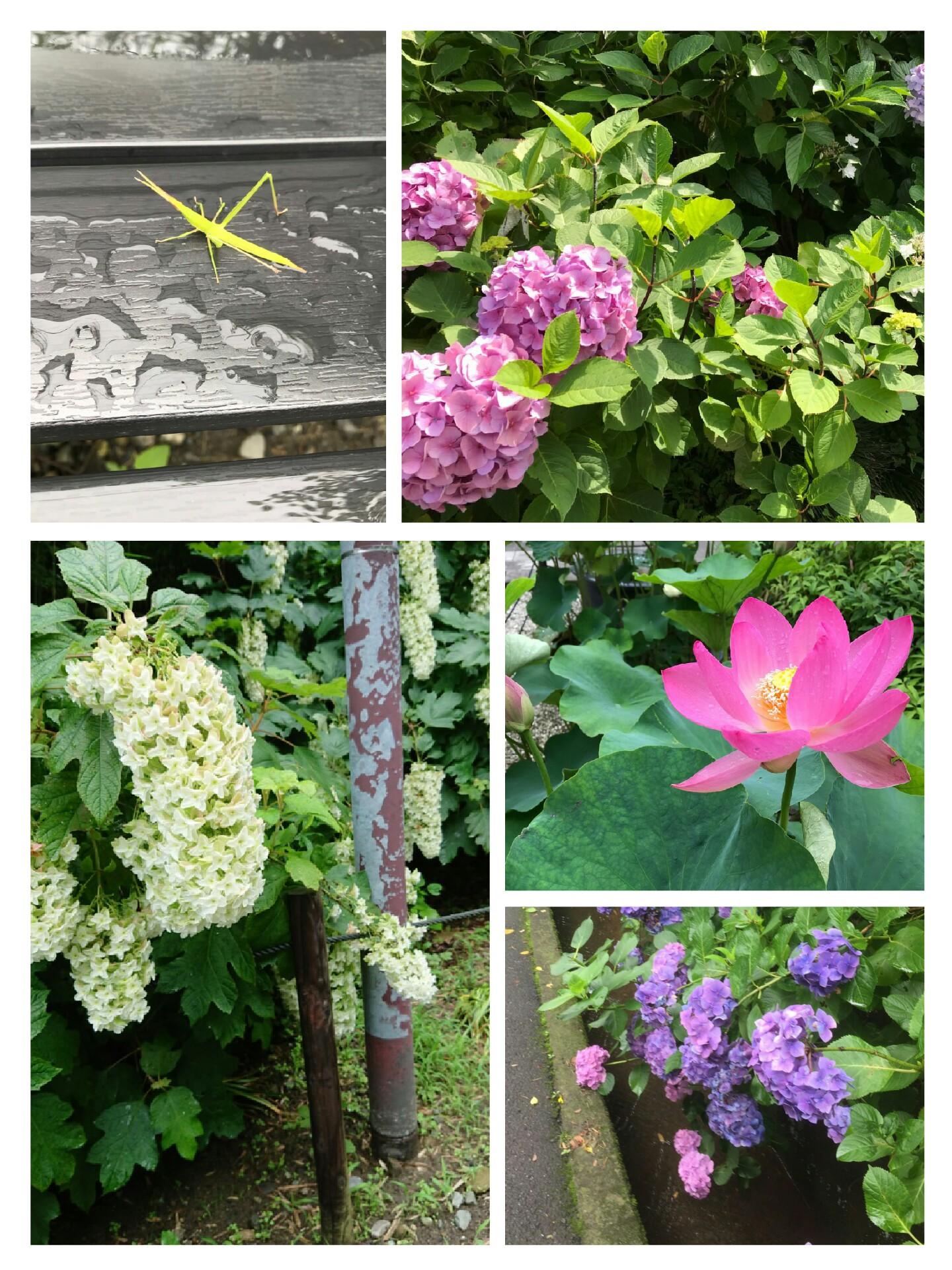 collage-1530600856522.jpg