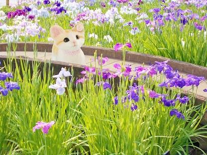 菖蒲にうっとり猫ちゃん