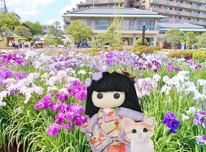 堀切菖蒲園に行ってきました 2018
