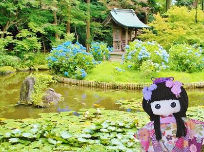 紫陽花と弁天池です