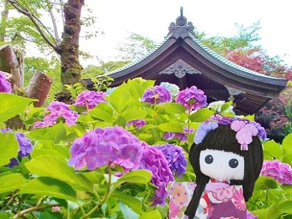 またね 紫陽花の本土寺