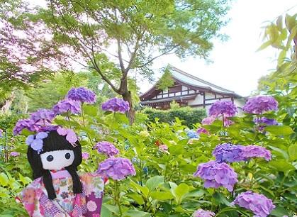 紫陽花の祖師堂です