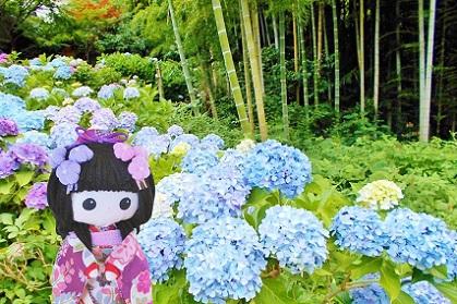 紫陽花の坂 本土寺