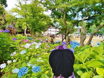 本土寺 本堂からの眺め