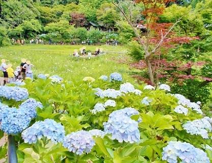 菖蒲池が見えてきました 本土寺