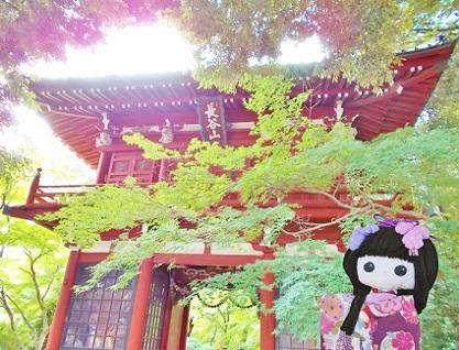 松戸 本土寺 紫陽花