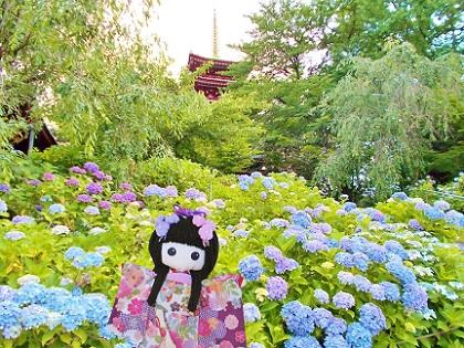 本土寺の紫陽花と五重塔です