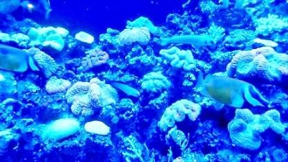 サンゴさんと熱帯魚さん