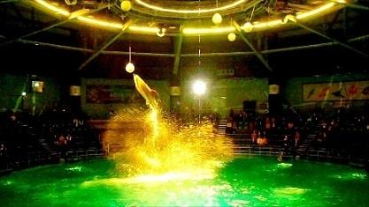 ボールにジャンプ イルカさん