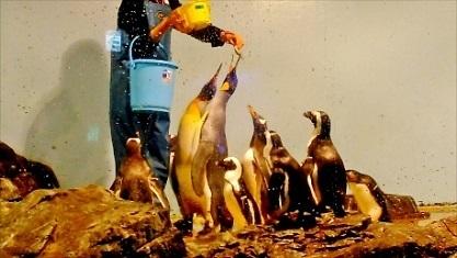 ペンギンさんのお食事 品川アクア