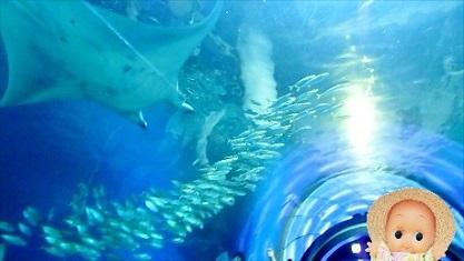 海底トンネル 品川アクア