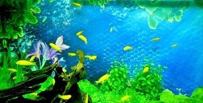 可愛い黄色の熱帯魚さん