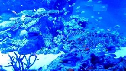 美しい熱帯魚さん 品川アクア