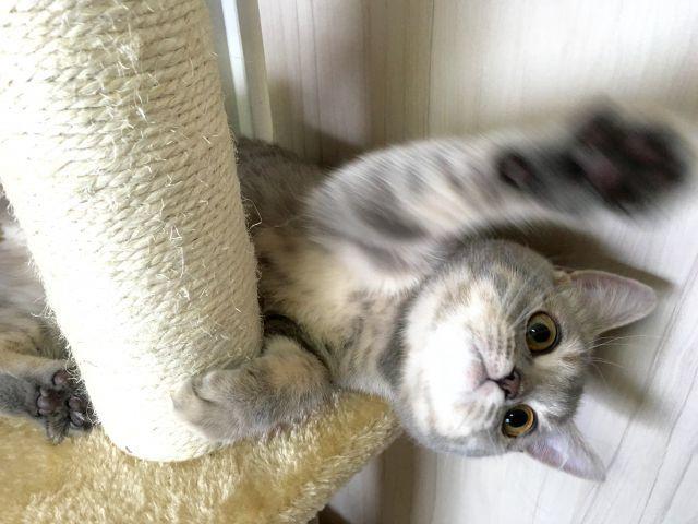 引っかく 猫