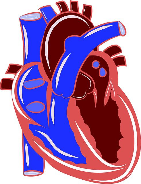 病気のガンに「心臓ガン」がないのは何故?