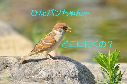 010_20180711204357ce1.jpg