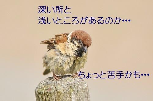 110_20180626022703206.jpg