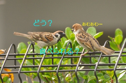 120_201807182203596bb.jpg
