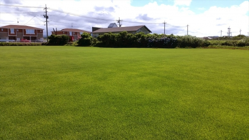 swedenhome_tottori_grass.jpg