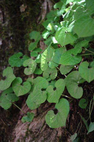 hutabaaoi1805-01.jpg