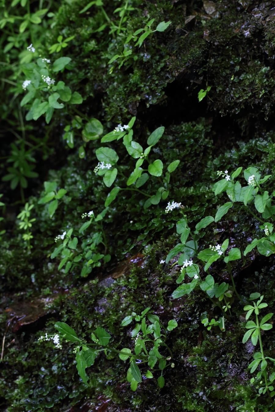 mizutabirako1806-05.jpg