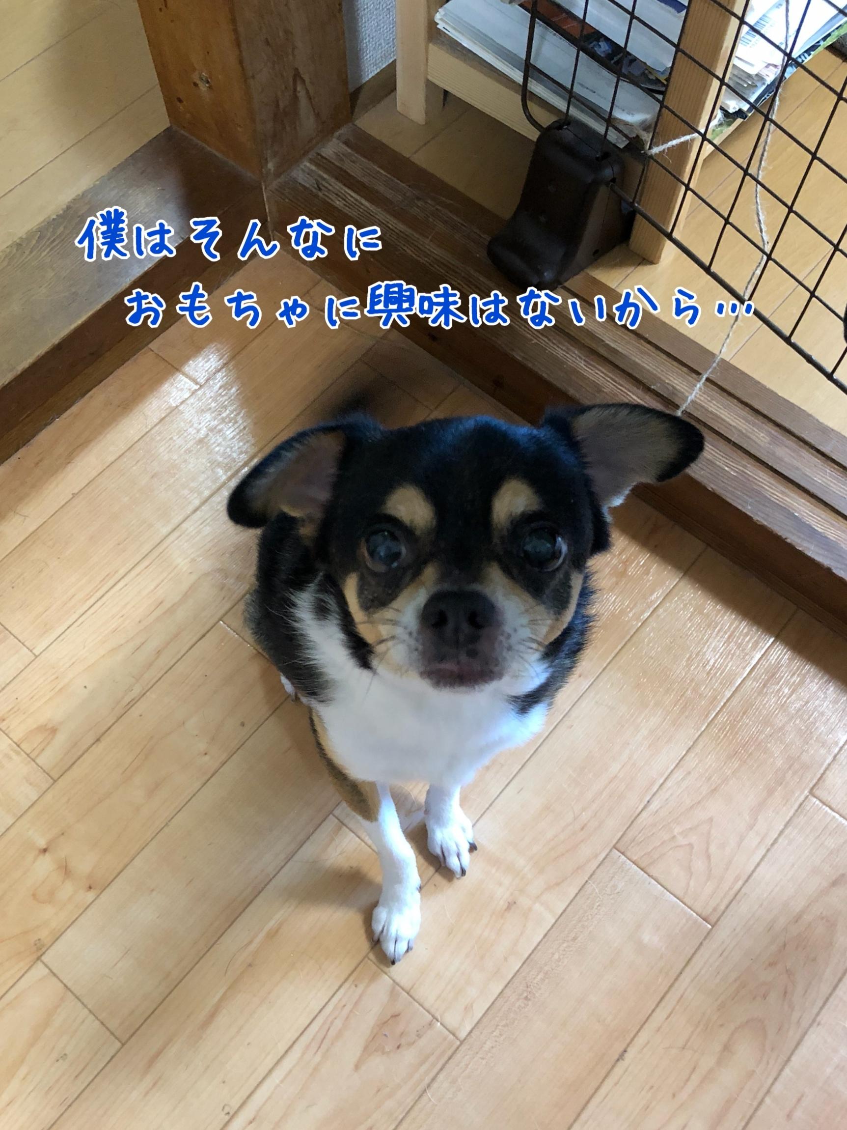 IMG_4949.jpg