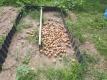 畑に廃棄したジャガイモ