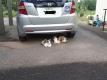 車の下に避難する猫
