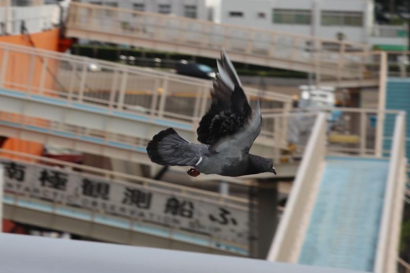 名古屋港0011