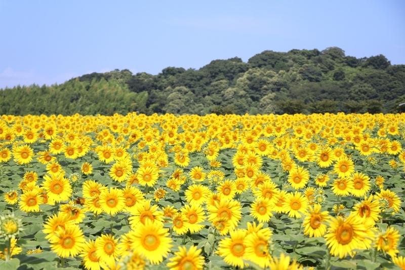 花ひろば0006