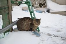 きくや商店の猫たち③