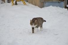 きくや商店の猫たち⑦
