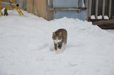 きくや商店の猫たち⑥