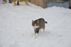 きくや商店の猫たち⑧