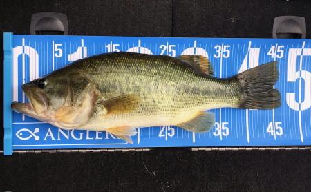bass46--450.jpg