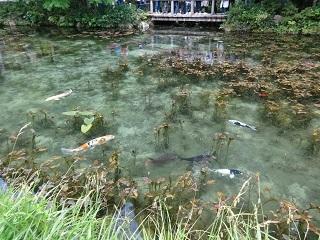 モネの池 その2