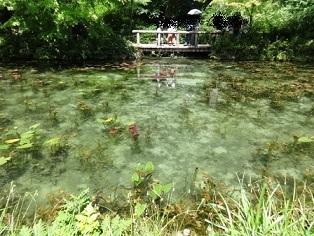 モネの池 その5