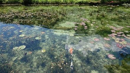 モネの池 その9